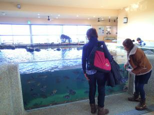 海のマルシェ水族館